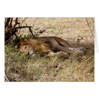 LION IN KENYA AFRICA CARD