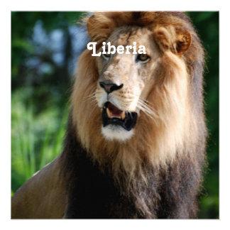 Lion in Liberia Invitation