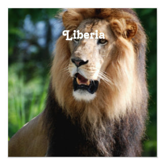 """Lion in Liberia 5.25"""" Square Invitation Card"""