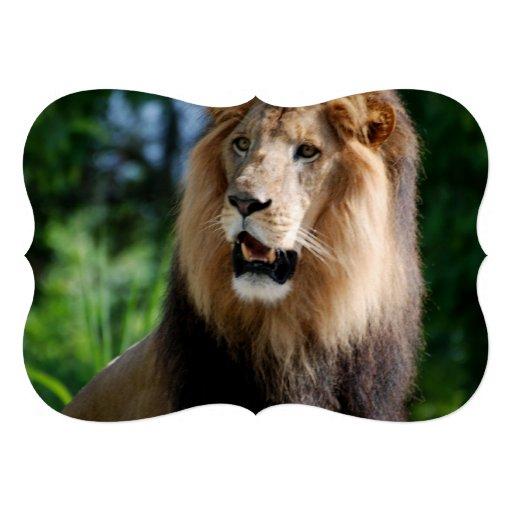 Lion in Liberia Personalized Invitations