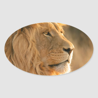 Lion is known to be the King of Beasts Oval Sticker