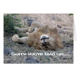 Lion 'laid up' Card (Masai Mara)