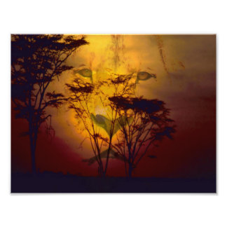 Lion Looking Over African Sunset Photo Print