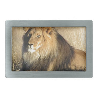 Lion lounging in Nambia Belt Buckle