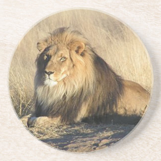 Lion lounging in Nambia Coaster