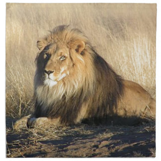 Lion lounging in Nambia Napkin