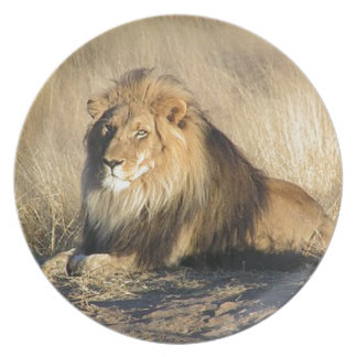 Lion lounging in Nambia Plate