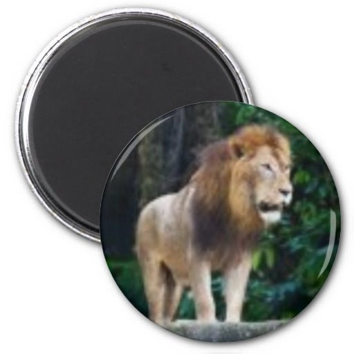 Lion Magnet - Customized