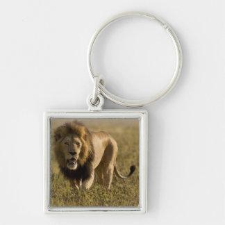 Lion male hunting key chain