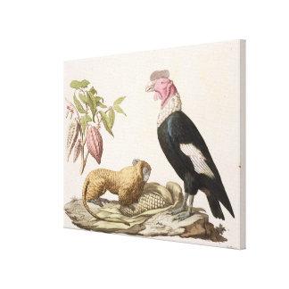 Lion monkey and condor, native to Chile or Ecuador Canvas Print