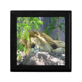 lion nap gift box