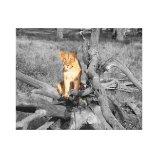Lion on a tree trunk canvas print