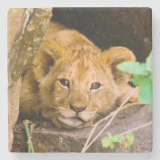 Lion (Panthera Leo) Cub In Cave, Maasai Mara Stone Coaster