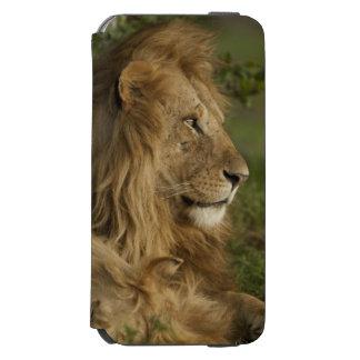 Lion, Panthera leo, Lower Mara, Masai Mara GR, Incipio Watson™ iPhone 6 Wallet Case
