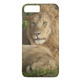 Lion, Panthera leo, males resting iPhone 7 Plus Case