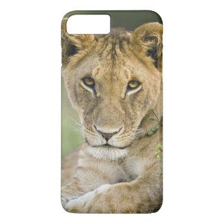 Lion, Panthera leo, Masai Mara, Kenya iPhone 7 Plus Case