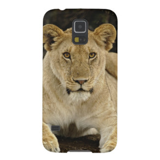 Lion, Panthera leo, Serengeti National Park, Cases For Galaxy S5