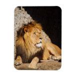 Lion Photo Premium Magnet Magnets