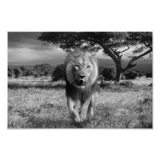 lion photo print