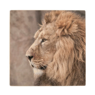 Lion Portrait Wood Coaster