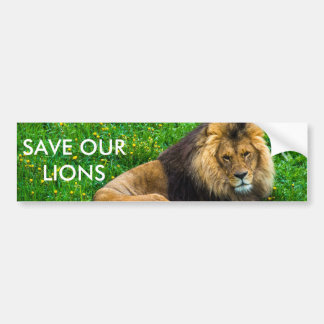 Lion Relaxing in Green Grass Photo Bumper Sticker