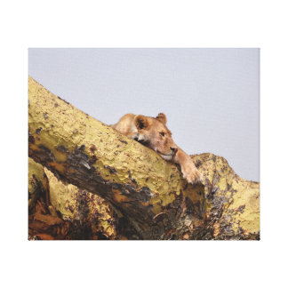 Lion resting in a tree canvas print