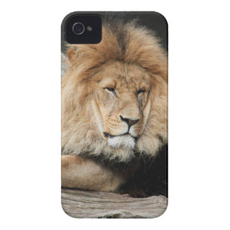 Lion Resting iPhone 4 Covers