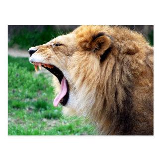 lion roars postcard