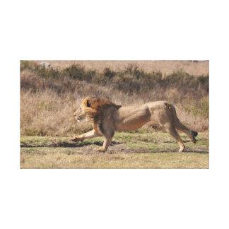 Lion running canvas print