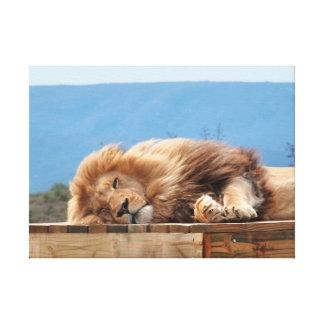 Lion sleeping close-up canvas print