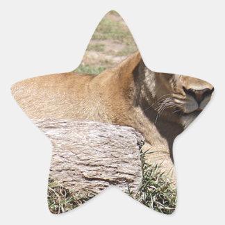 Lion Star Sticker