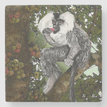 Lion  Tailed  Macaque Eating A Fig Stone Coaster