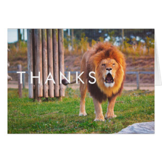 Lion Thank You Note Card