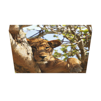 Lion Themed, A Female Lion Sitting On Tree With He Canvas Prints
