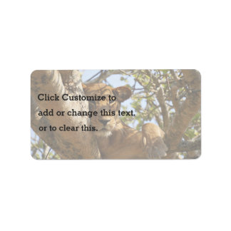 Lion Themed, A Female Lion Sitting On Tree With He Address Label