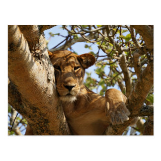 Lion Themed, A Female Lion Sitting On Tree With He Postcard