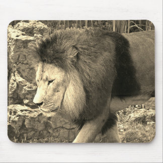Lion Walking - Mouse Pad