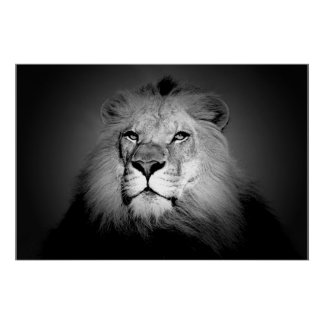 Lion - Wild Animal Photography Poster