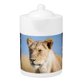 Lioness against blue sky