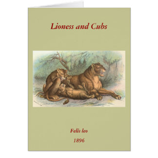 Lioness and Cubs, Felis leo Greeting Card