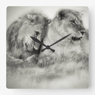 Lioness and son sitting and nuzzlingin Botswana Wallclocks