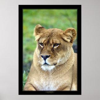 Lioness (Color Version) Poster
