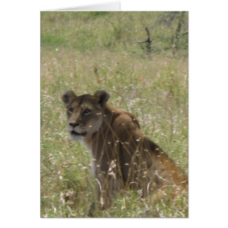 Lioness in Tall Grass Card