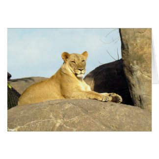 Lioness Keeping Watch Card