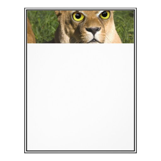 Lioness on Watch Personalized Flyer