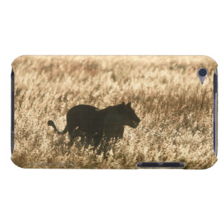 Lioness (Panthera leo) silhouetted in long grass iPod Touch Cover