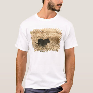 Lioness (Panthera leo) silhouetted in long grass T-Shirt