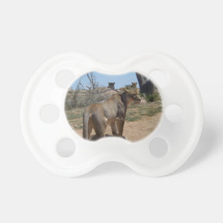 Lioness Patroling Her Turf Pacifiers