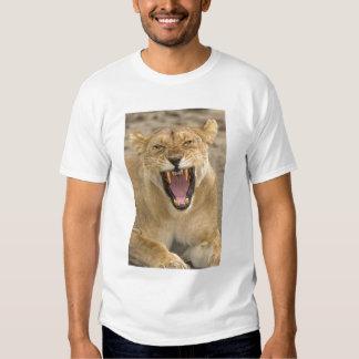 Lioness Snarl B, East Africa, Tanzania, Shirts