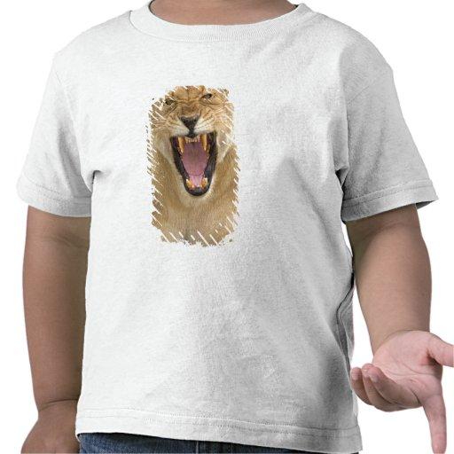 Lioness Snarl B, East Africa, Tanzania, Tee Shirts